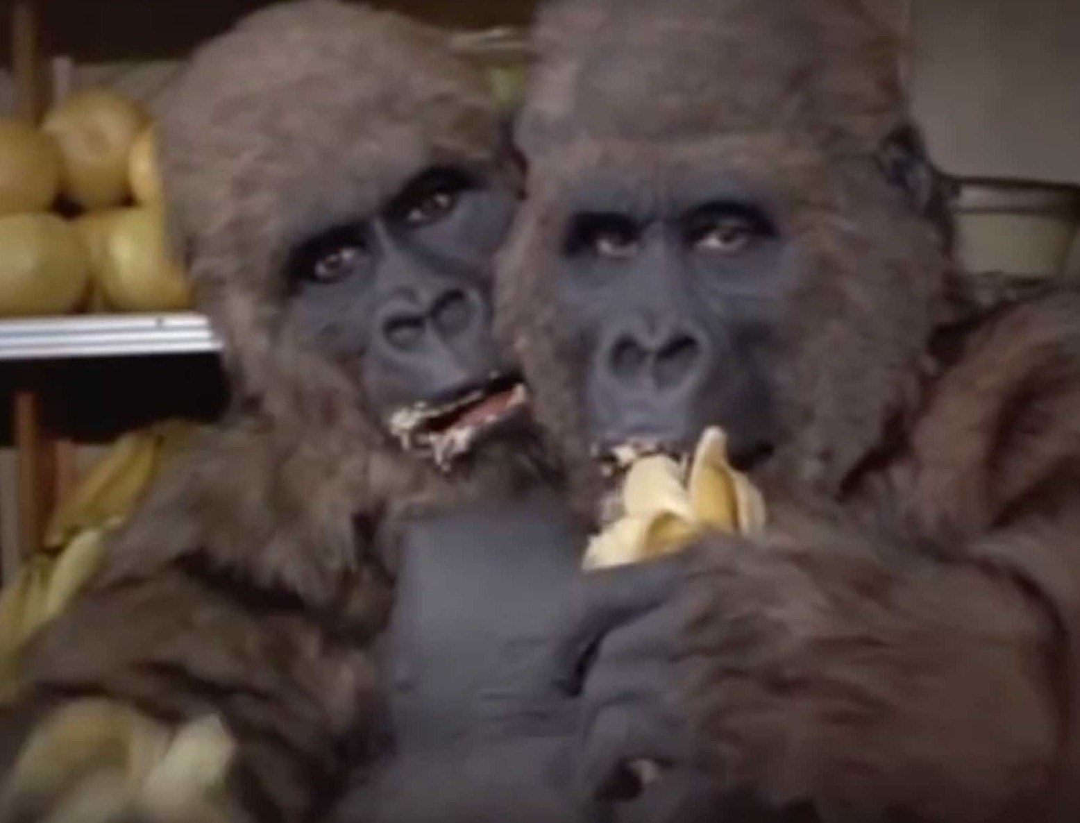 """Gorillas, Motocross, and """"The Thing with Two Heads"""" (1972) – Blaxploitation Horror #2"""
